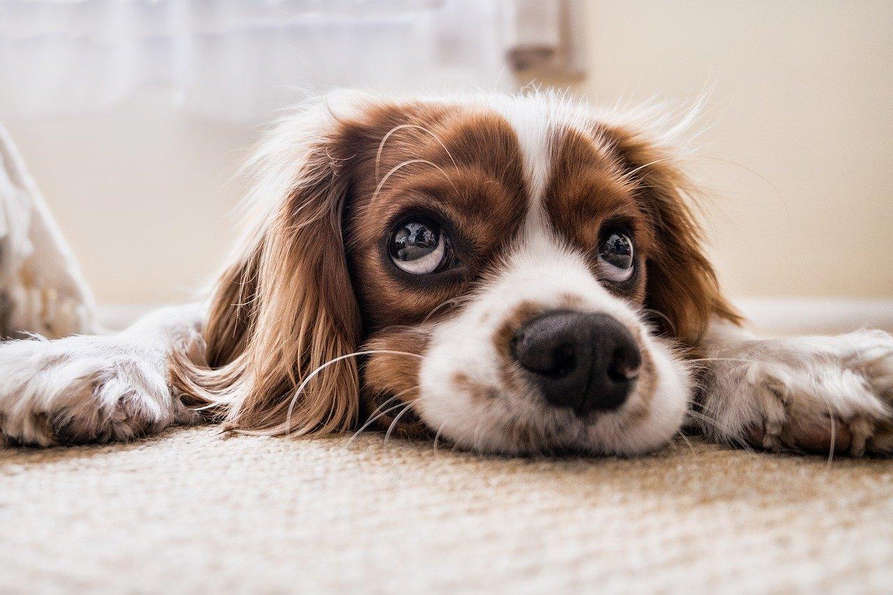 Jaka karma dla psa jest najlepsza?
